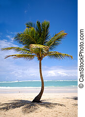 Exotic beach with palm