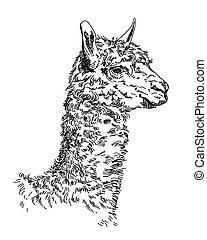 Lama vector hand drawing Illustration - Engraving Vector...