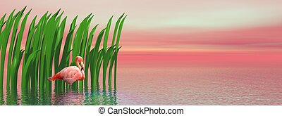 Flamingo and waterplants by sunset - Beautiful pink flamingo...