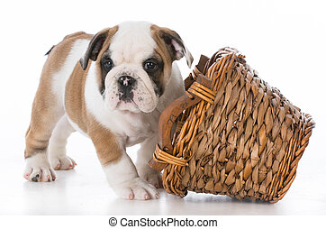 puppy playing with basket