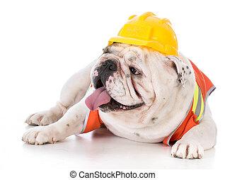 穿, 背心, 建設, 狗, 工作