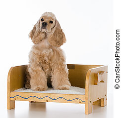 dog on a bed
