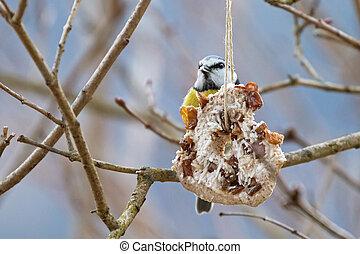coco, invierno, árbol, pasa, grasa, alimentador, nuez,...
