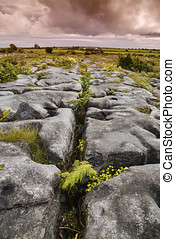 The Burren, Karstlandschaft in Irland - the burren, burried...