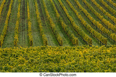 View on vineyard in Italy