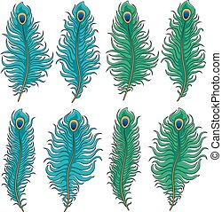 Set of colored peacock feather
