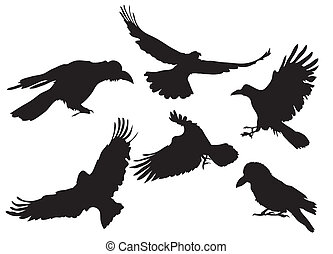 crow silhouette - Vector illustration collection of crow...