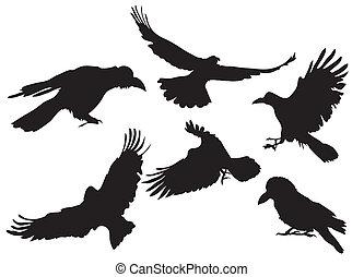烏鴉, 黑色半面畫像