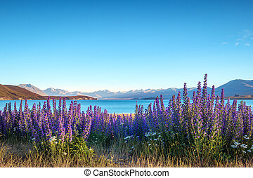 Landscape view of blooming flowers and Lake Tekapo...