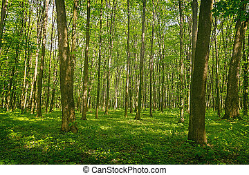 Green forest background - forest trees. nature green wood...