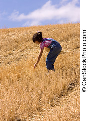 Searching for leftover wheat stalks