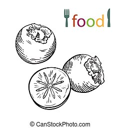 persimmon on a white background - vector sketch of persimmon...