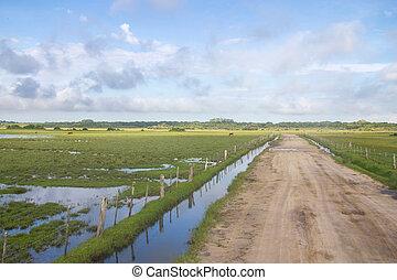 Dirty road to Lagoa do Peixe lake - Cows grazing at a farm...