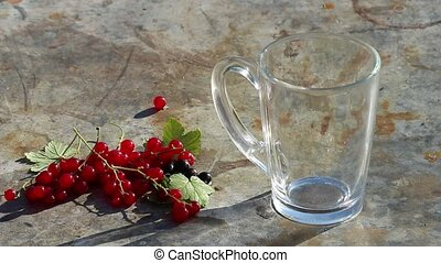 Glass cup with pouring milk and red currants berries in day...