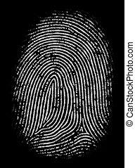 Highly Detailed Fingerprint - Black and white fingerprint in...