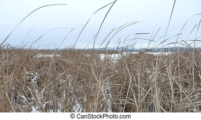 dry the grass marsh winter nature reed beautiful landscape -...