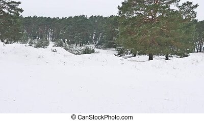 trees forest christmas tree, snow frost cold nature the...