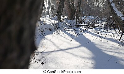 frozen nature forest stream in the snow tops of trees landscape