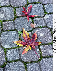 Bright autumn background with yellow and orange leaves on paving stones.