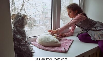 girl teen and pets cat and dog a looking pet out the window,...