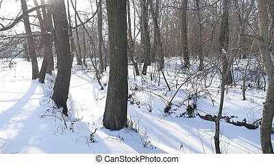trees winter forest snow, landscape nature frozen the river...