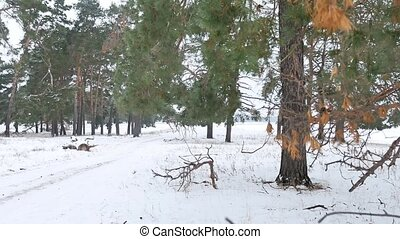 trees nature forest christmas tree, snow frost cold the...