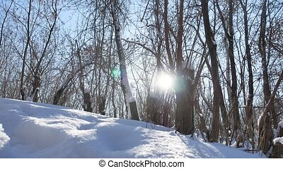 Winter forest trees in nature the snow glare of sun,...