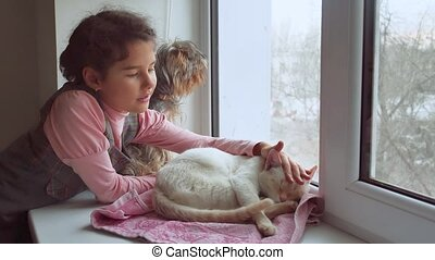 girl teen and pets cat and dog looking out the window, cat...