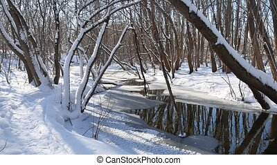 forest stream flows in landscape the winter forest nature snow