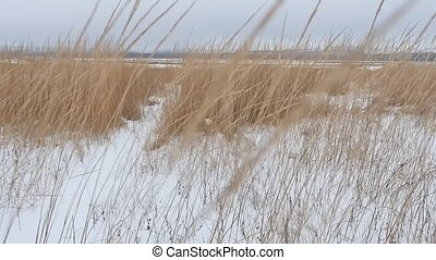 dry grass field winter snow winter nature the landscape -...