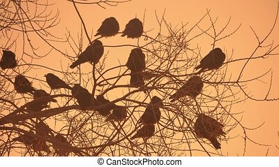 sunset crows nature flock of birds sitting on the tree...