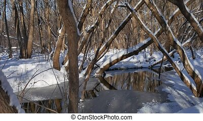 forest landscape stream flows in the winter forest nature...