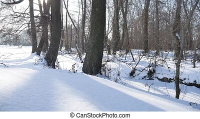 trees winter forest snow, nature landscape frozen river -...