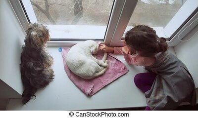 girl teen and pets cat and dog a pet looking out the window,...