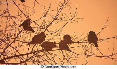 nature sunset crows flock of birds sitting on the tree cold...