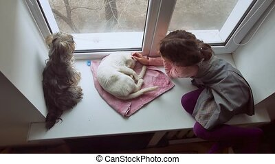 girl teen and pets cat and dog pet a looking out the window,...