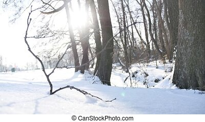 trees winter dry forest twig sunlight snow, landscape nature...