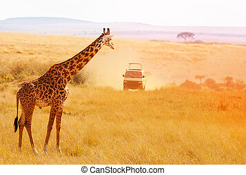Picture of beautiful giraffe at sunset, Africa