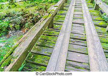 Wooden bridge in tropical green forest covered with moss . -...