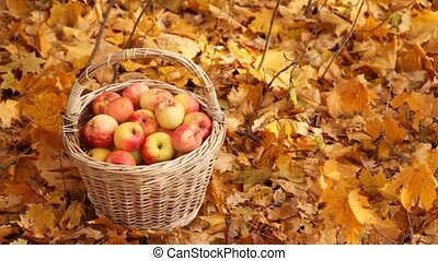 hand picking up basket with apples - male hand picking up...