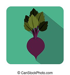 Fresh beet vegetable icon vector illustration graphic design