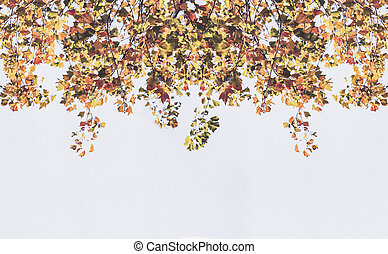 Backdrop from maple leaves in autumn with sunlight on white...