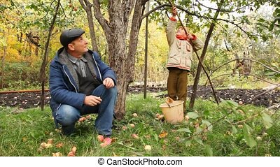 boy pick apple from apple-tree, grandfather sits nearby -...