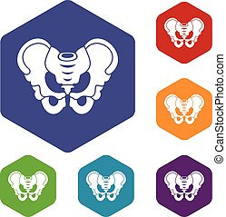 Pelvis icons set rhombus in different colors isolated on...