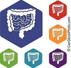 Intestines icons set rhombus in different colors isolated on...