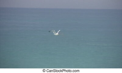 lonely white seagul flying above sea