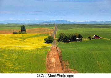 Palouse landscape - Gravel road through beautiful Palouse...