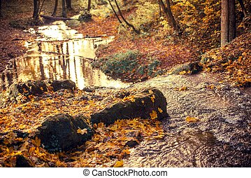 Fall Foliage Autumn Forest with Small Mountain River.