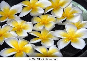 Yellow Plumeria flower Spa