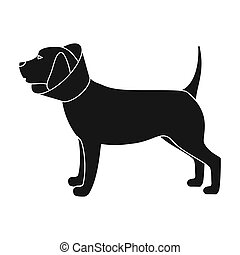 Dog with elizabethan collar icon in black style isolated on...